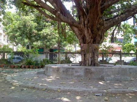 A Giant Tree at Hanuman Mandir, Laxminagar, Nagpur
