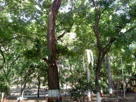 Greenary at Grotto, Nagpur